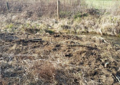 Planting 2(opt)